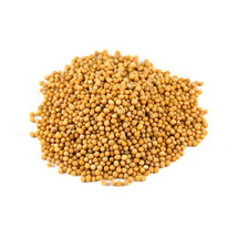Provvista Whole Yellow Mustard Seed